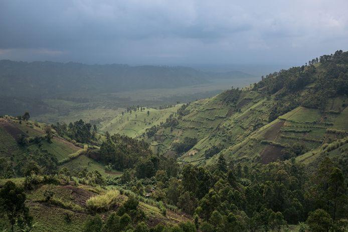 Illustration Kivu.