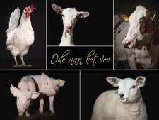 Een boek vol boerderijdieren tegen corona-eenzaamheid bij ouderen