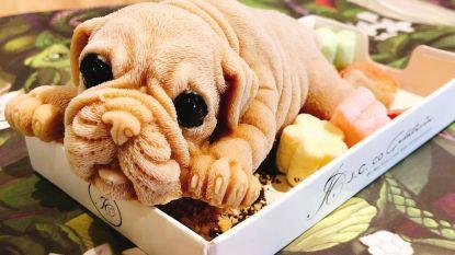 Deze puppy's zijn letterlijk om op te vreten
