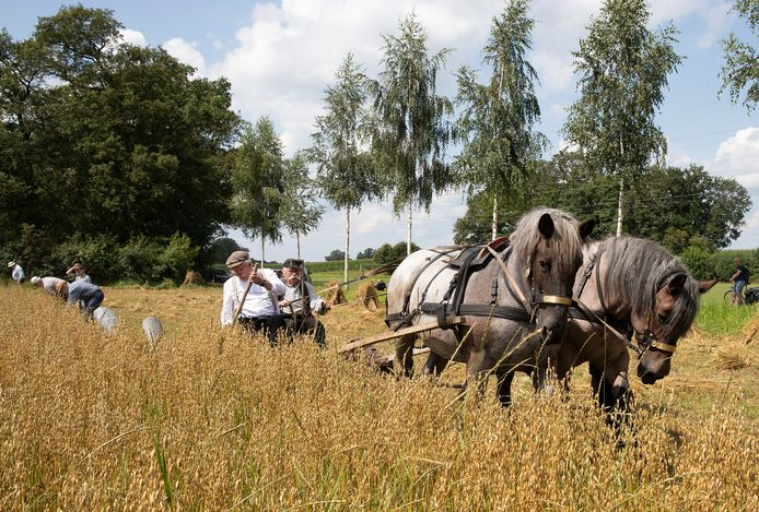 De maaimachine werkt nog echt op paardenkracht
