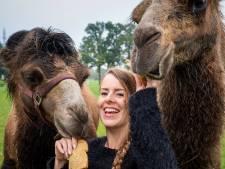 Nieuwe kameel voor circus Bolalou, maar trainen voor voorstellingen hoeft nog niet