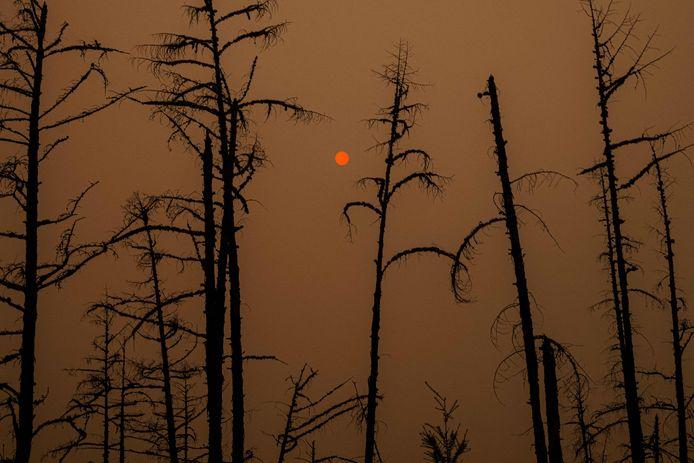 Cette photo prise le 27 juillet 2021 montre la lumière du soleil filtrée par la fumée des forêts en feu près du village de Magaras dans la république de Sakha, en Sibérie.