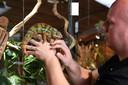 Eigenaar Oscar Maas met een kameleon in Reptielenhuis De Aarde in Breda.