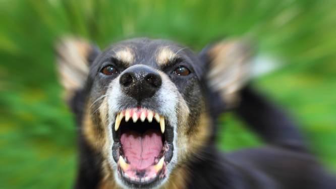 Bewoner Skaeve Huse weigert hond weg te doen, WonenBreburg eist zijn vertrek