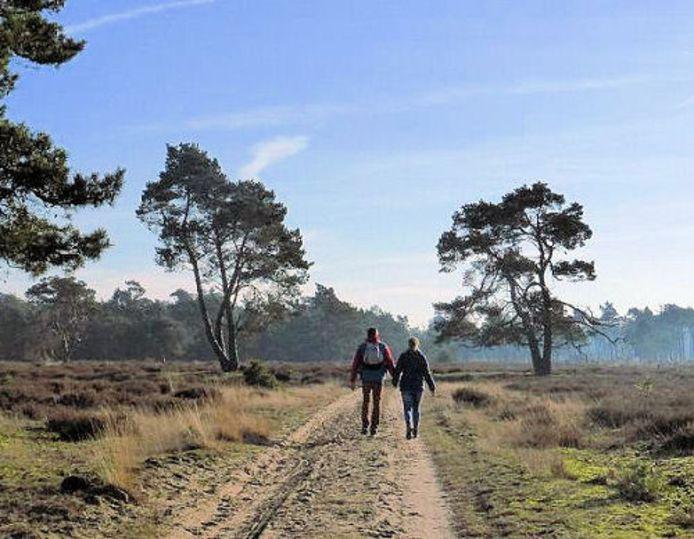 In een 'Trage Tocht' wandelen door heuvelachtige bossen en langs een zandverstuiving.