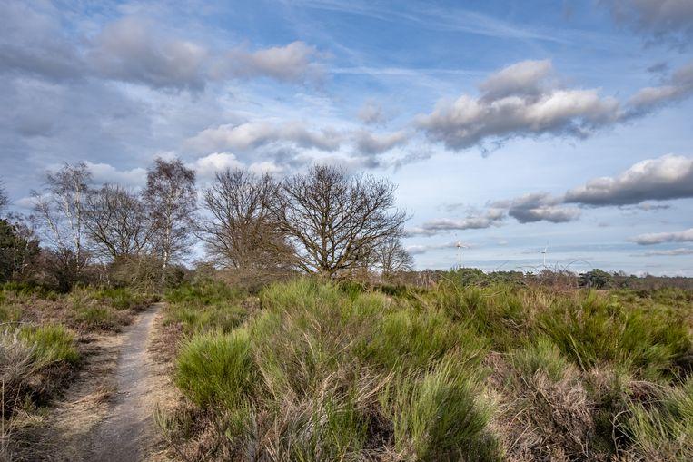 De vogeltjes fluiten en het zonnetje schijnt tijdens een mooie lentedag in Limburg.  Beeld Joris van Gennip