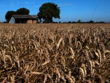 """""""C'est fou"""": l'embarras du monde agricole face à la flambée des engrais"""
