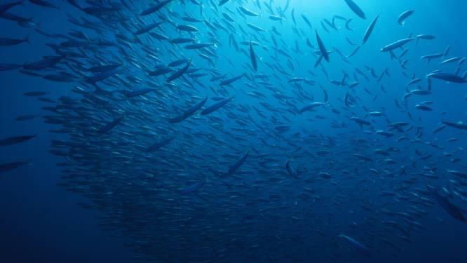 Alarmerend rapport: geen wilde vis meer in 2047