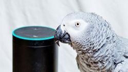 Papegaai probeert eten te bestelling via spraakbesturingssoftware
