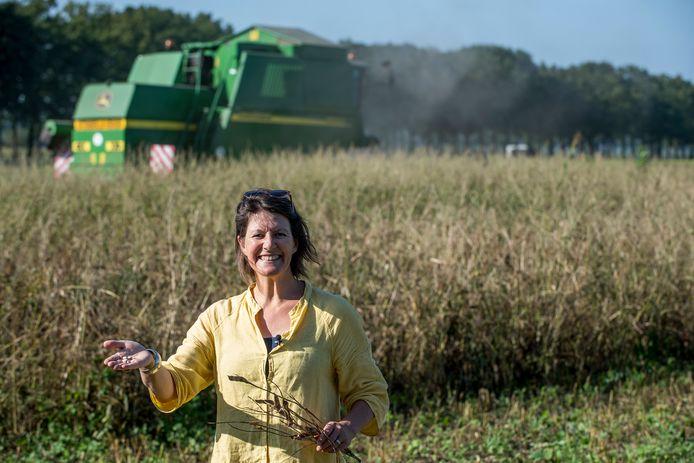 Marike Laméris in het veld vol lupinebonen, die sinds gisteren geoogst worden.