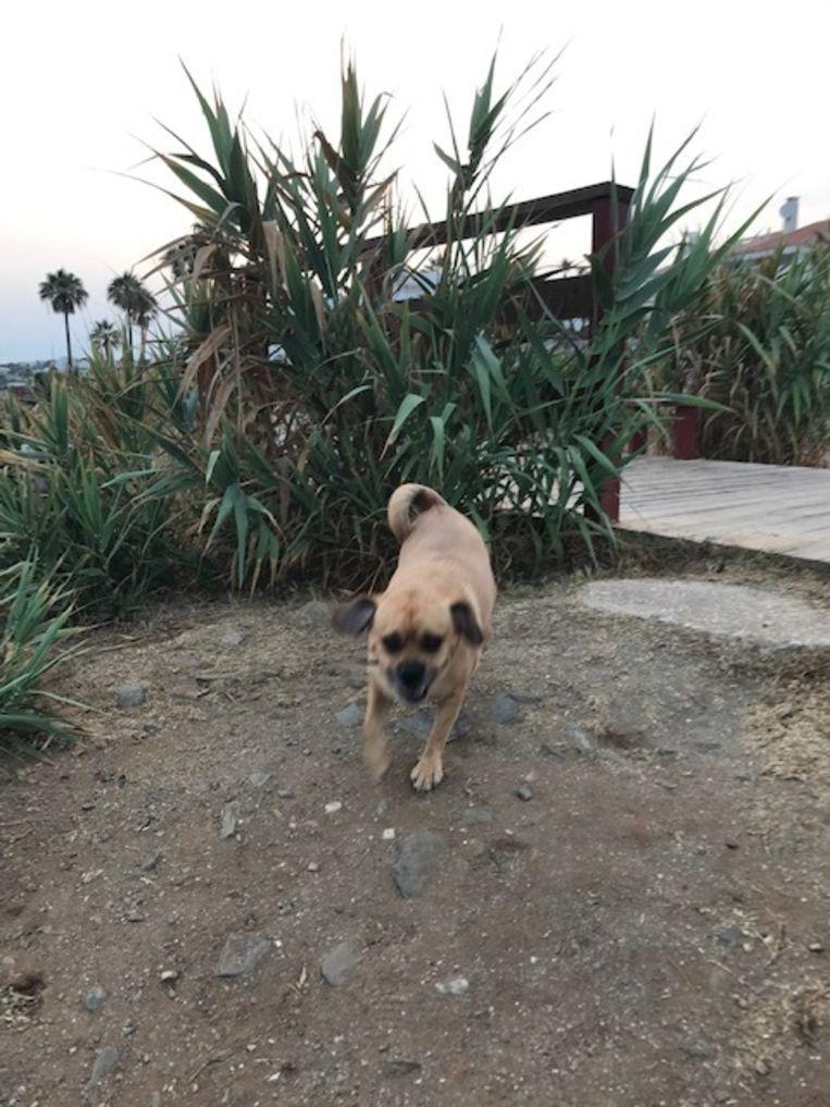 Maurice op de plek waar Goedele Liekens gevallen is - een van zijn favoriete plekjes in Estepona.