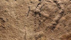 Oudste 'pootafdrukken' gevonden in China