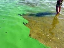 Waterschap en gemeente ontdekken blauwalg in De Groote Wielen in Rosmalen