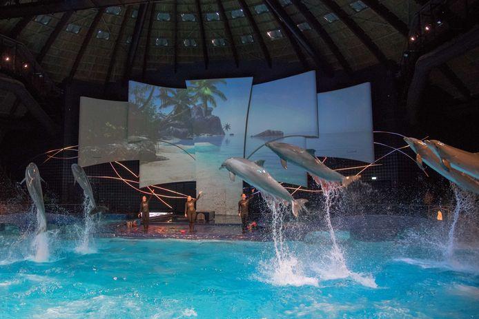 De dolfijnenshow in de koepel is eind vorig jaar vernieuwd.