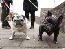Baasjes honden nog niet massaal op de bon
