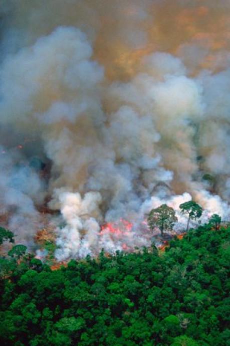 La plupart des photos partagées sont sans rapport avec les incendies en Amazonie