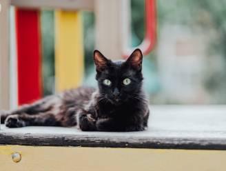 """""""Mijn kat is een dief"""": viervoeter steelt bezittingen van buren in Amerikaanse staat Oregon"""