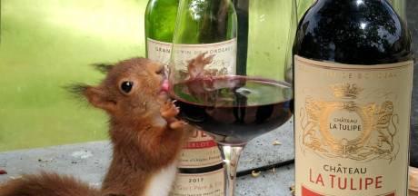 Toen Eekie de eekhoorn op de wijnboerderij van Ilja Gort terechtkwam kreeg hij een speciaal wijnkistje