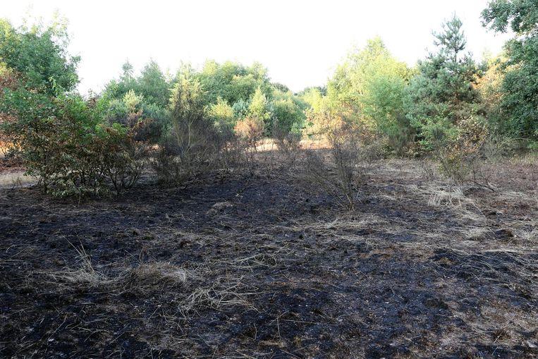Het heeft gebrand in het natuurgebied in de Buskruitstraat.