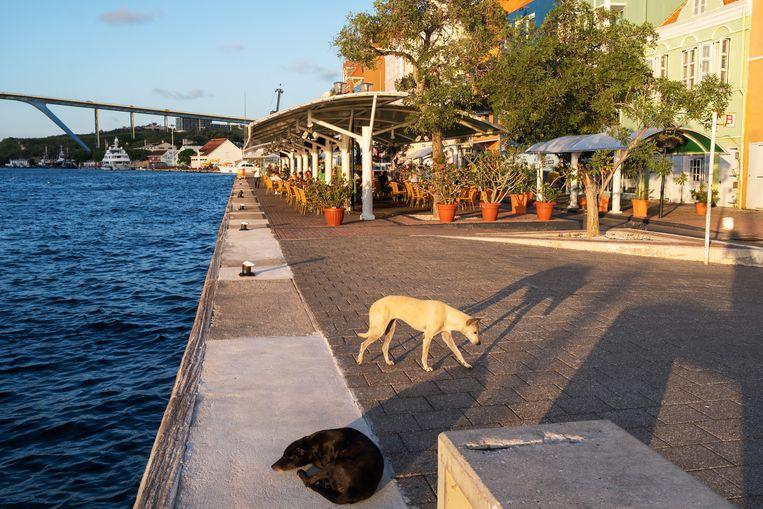 De stranden van Curaçao gaan dicht en de laatste cafés die nog open waren moet ook tijdelijk sluiten. Beeld Sabine van Wechem