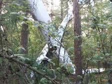 Zweefvliegers maakten 'voorzorgslanding' in boomtoppen