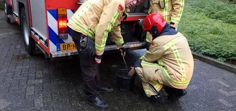 Schildpadjes gered bij woningbrand in Eindhoven