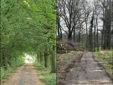 Bomenlaan De Lutte werd illegaal gekapt