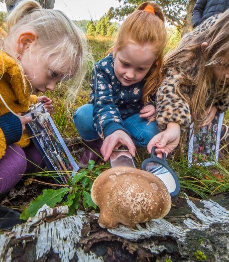 Kinderen op paddenstoelenjacht in het Buurserzand: 'Aan paddo's doen we niet, daar ga je heel raar van zweven'