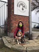 Beagle Luka was de eerste Leuvense hond die onderdak vond in het dierenasiel in Mechelen.
