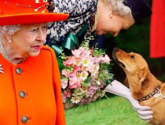 Koningin Elizabeth krijgt nieuwe corgi voor haar verjaardag