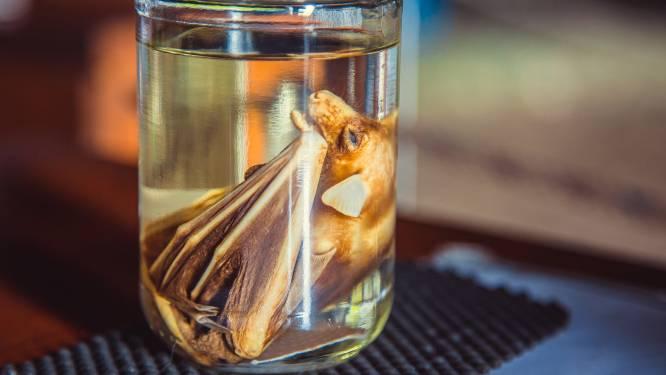 Amerikaanse diplomaten waarschuwden twee jaar geleden voor riskant onderzoek op vleermuizen in lab in Wuhan