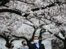 Mega-evenement kersenbloesems in Japan gaat niet door: 'Vreemde tijden'