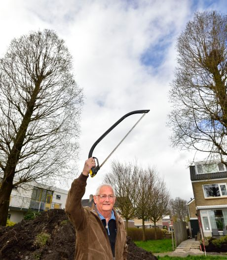 Schaduw en rotzooi van naalden: Evert (75) wil de zaag zetten in twee woudreuzen. Maar de gemeente weigert