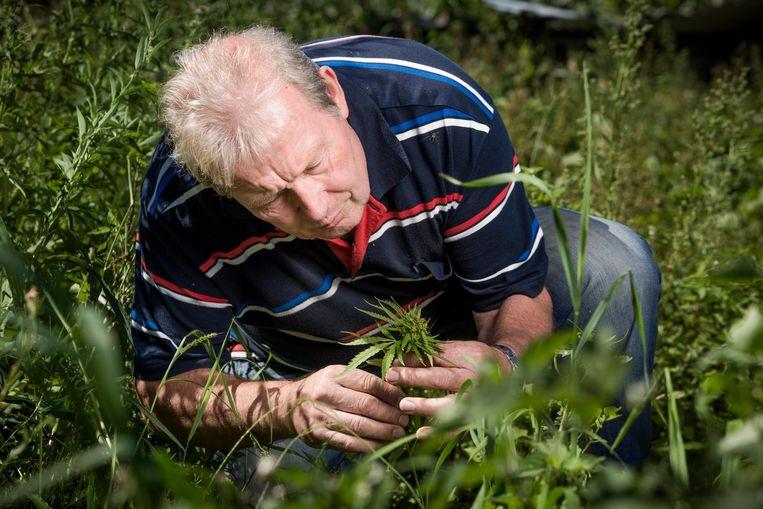 Henk Susebeek met een van de overgebleven hennepplantjes op zijn gerooide veld in Lievelde. Beeld Freek van den Bergh / de Volkskrant