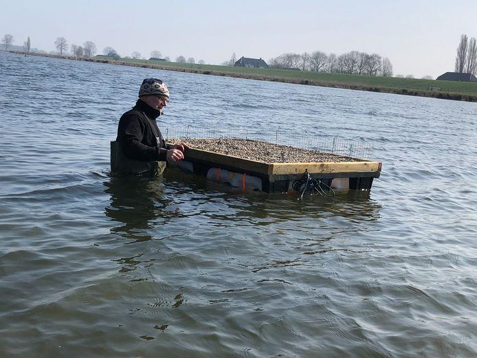 Het broedvlot voor het visdiefje werd eind maart door Mat Houben, lid van de vogelwerkgroep IVN Oss naar zijn plek op de Maas gedreven.