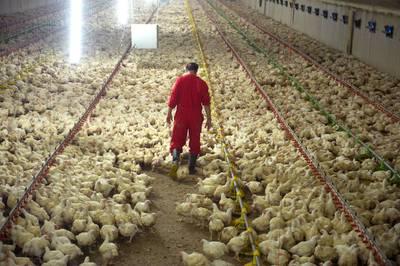 Bouw Winssense kippenstal voor de rechter