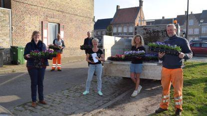 Stadsbestuur en bloemist zetten inwoners van Lo-Reninge letterlijk in de bloemen
