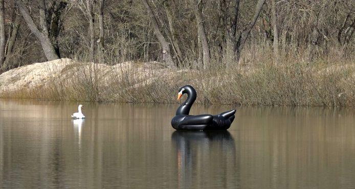 De zwarte zwaan is verdwenen.