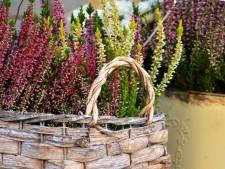 Vier mooie najaarsbloeiers die je nu kunt planten
