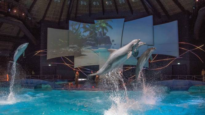 Dolfinarium moet dierenverblijven uiterlijk in 2029 volledig vernieuwen: 'Dat gaan we halen'