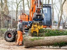 95 onveilige populieren gekapt op sportpark De Hoge Bomen in Naaldwijk