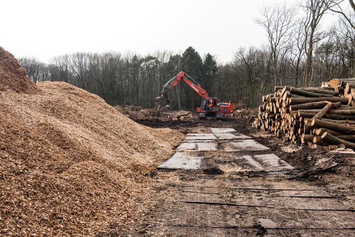 Amersfoortse politici wisten niets van de massale bomenkap langs de Utrechtseweg.