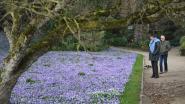 VIDEO: Bloemenpracht in Leuvense Kruidtuin