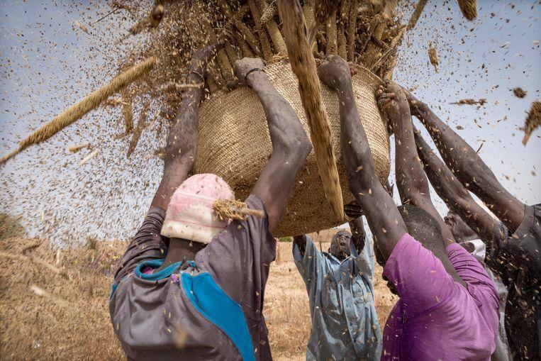 Mannen dragen manden met gierst naar een graansilo.  Beeld Sven Torfinn/Panos Pictures
