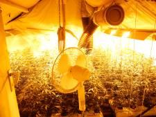 Politie rolt hennepkwekerij met 1300 planten op in Netersel