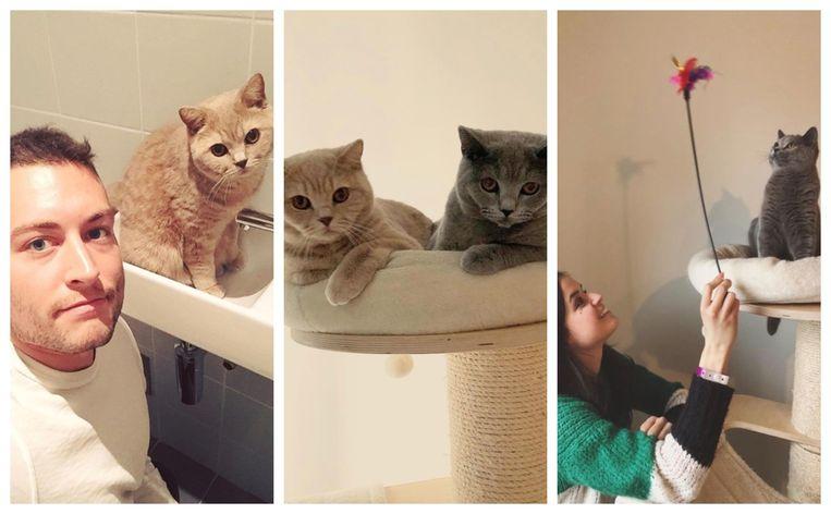 Viktor met Vermeersch @ Marthe met Modest. De katjes zitten op dezelfde krabpaal en liggen ook samen in de zetel.