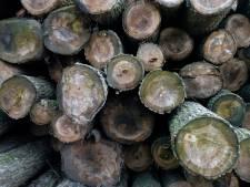 Broers Te Bogt uit Beltrum moeten geloven aan herplant van 15 nieuwe bomen