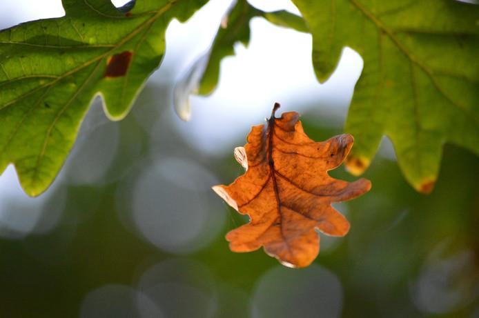 ga naar het bos, pak je camera en maak mooie foto's! iets wat ik gedaan heb, met een mooi resultaat