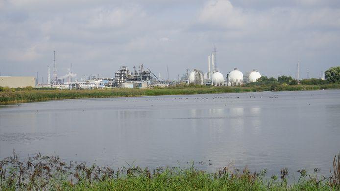 Het natuurreservaat Blokkersdijk ligt vlak naast het industriegebied van Zwijndrecht