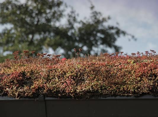Close-up van een groen dak.